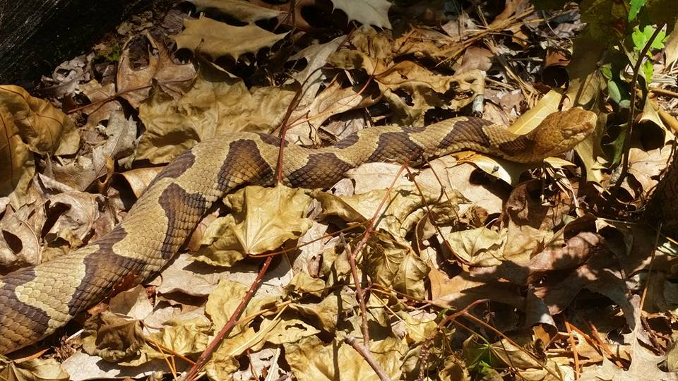 """project copperhead Okay, i can already hear you crying to me, """"why did you call it project: copperhead when it is clearly not copper"""" the answer to that question is simple i."""